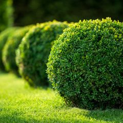 Find shrubs and bushes for sale nearby in Panama City Beach, FL